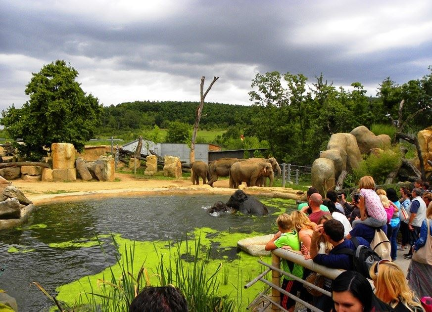 visit-to-the-Prague-Zoo-61