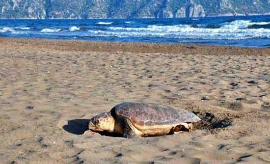 Cele mai frumoase plaje din Cipru pentru un sejur de neuitat11