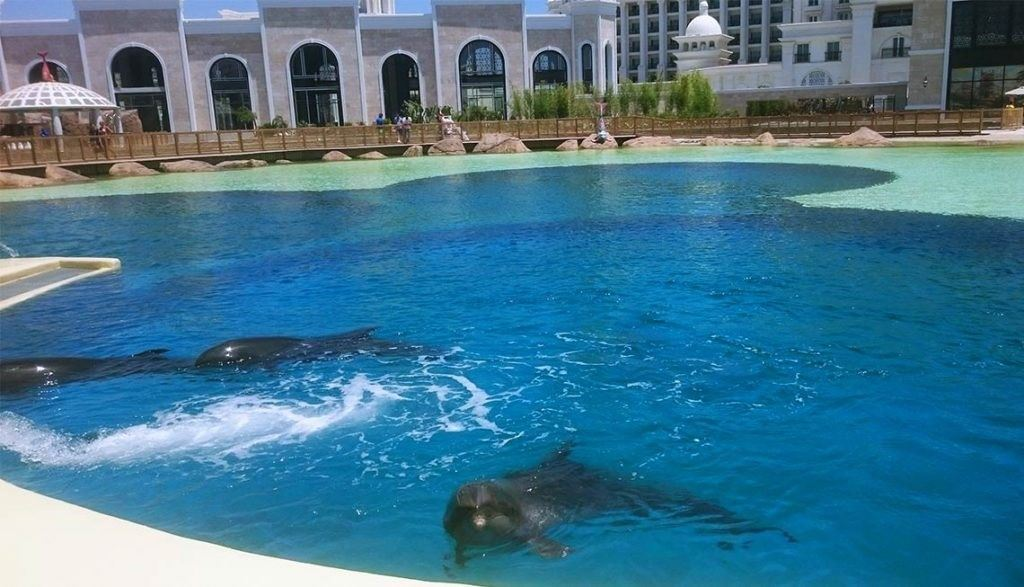 Rixos-World-Dolphin-Park