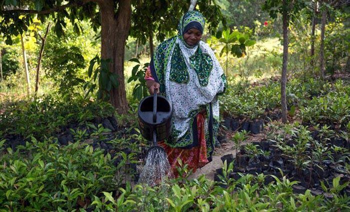 cuisoare-pemba-zanzibar-femeie