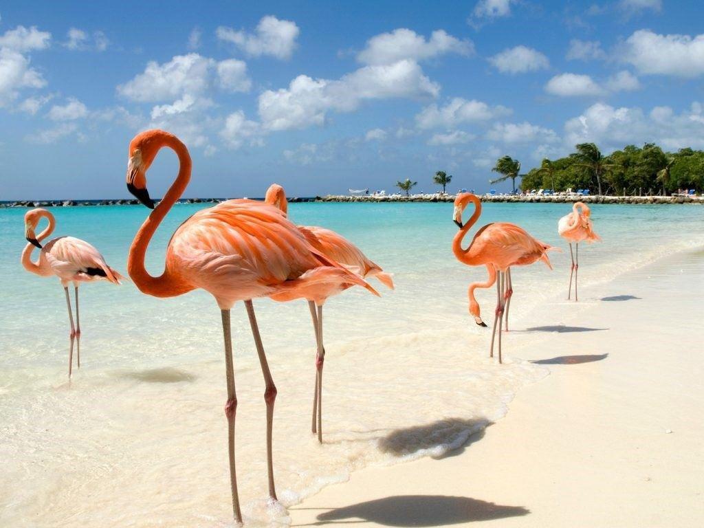 aruba-Renaissance-Island-flamingos-GettyImages-170618386