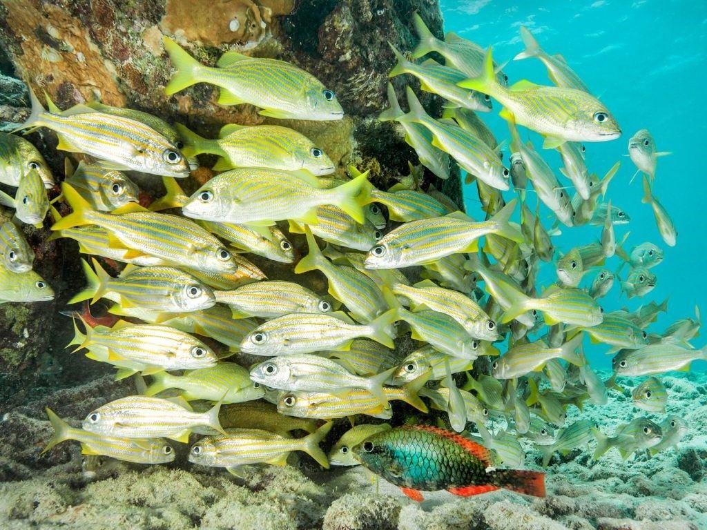 bonaire-reefs-GS1272595