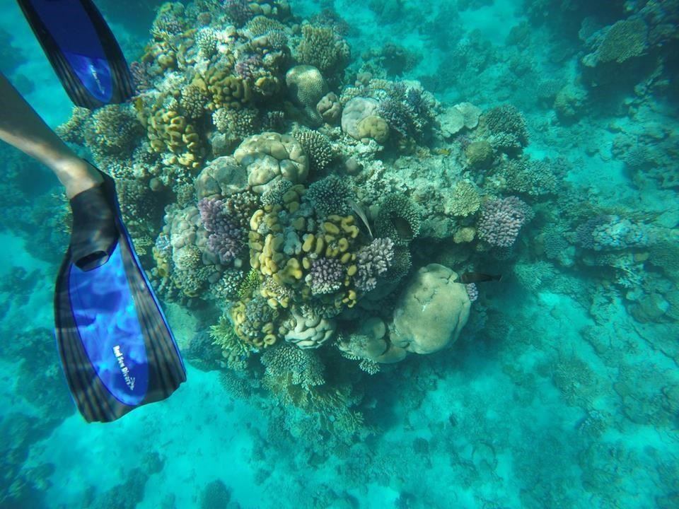 Scuba diving în Marea Roșie, Sharm El Sheikh - ANCAPAVEL.RO