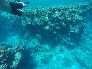 Scuba diving în Marea Roșie, Egipt