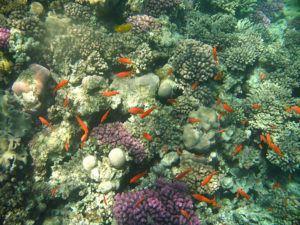 Sejur all inclusive în Hurghada, Egipt
