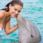 Insula delfinilor
