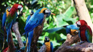 vacanta in Tenerife, la Loro Parque