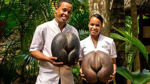 """Croaziere MSC 2019 - """"Inima Praslinului"""" jungla palmierilor din Seychelles"""