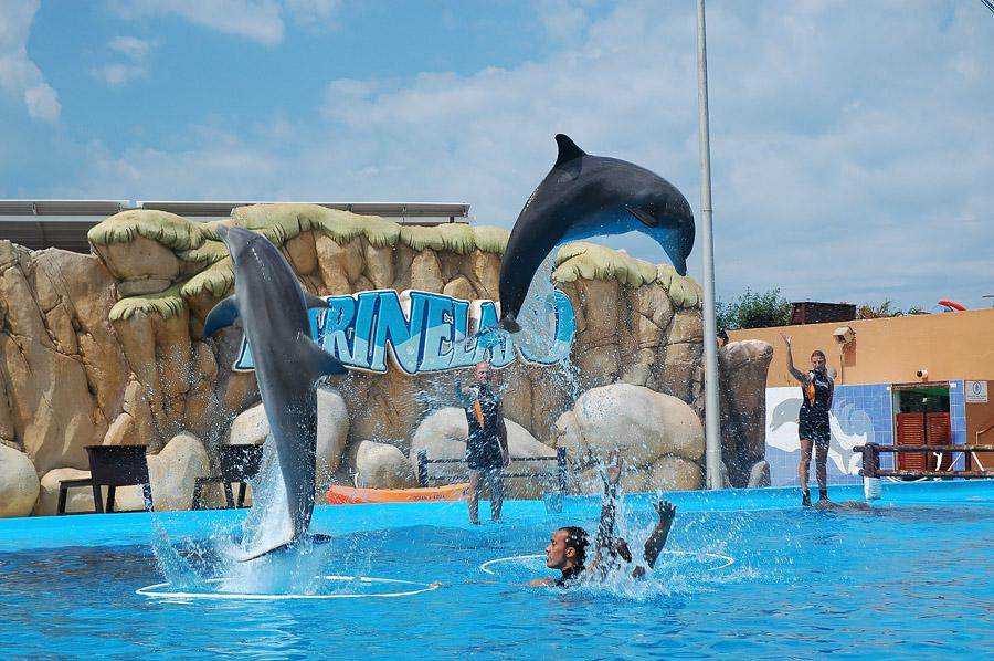 înotul cu delfinii la Marineland, Mallorca