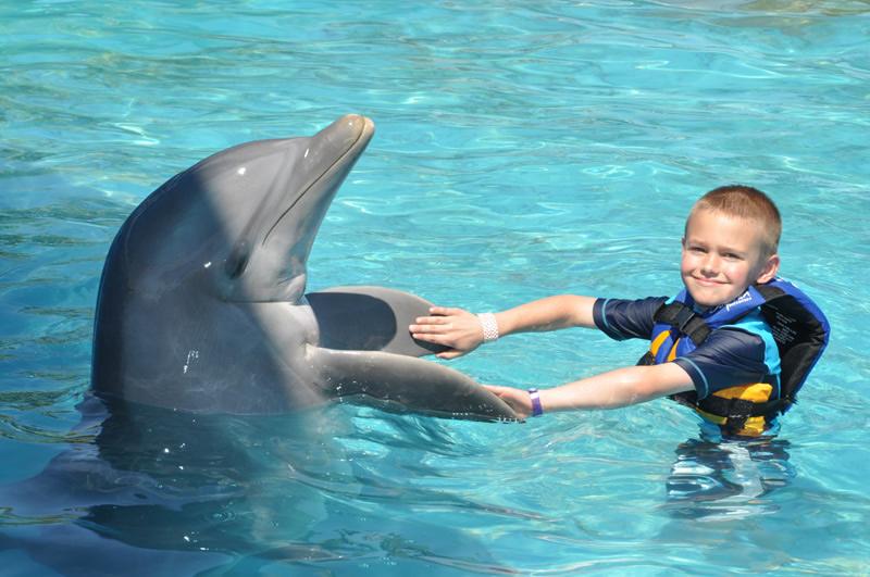înotul cu delfinii la Dolphin Explorer, Republica Dominicană
