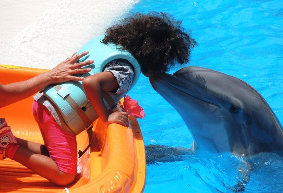 înot cu delfinii la Loro Parque, Tenerife - Spania