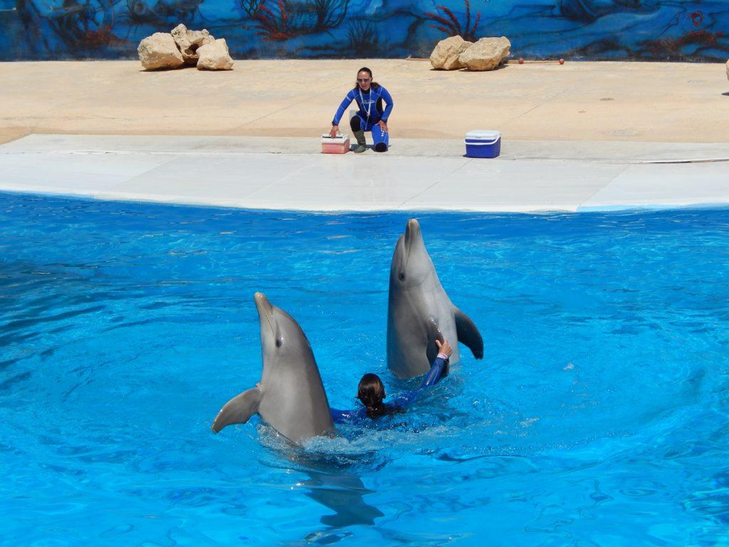 înot cu delfinii la Marine Park Malta