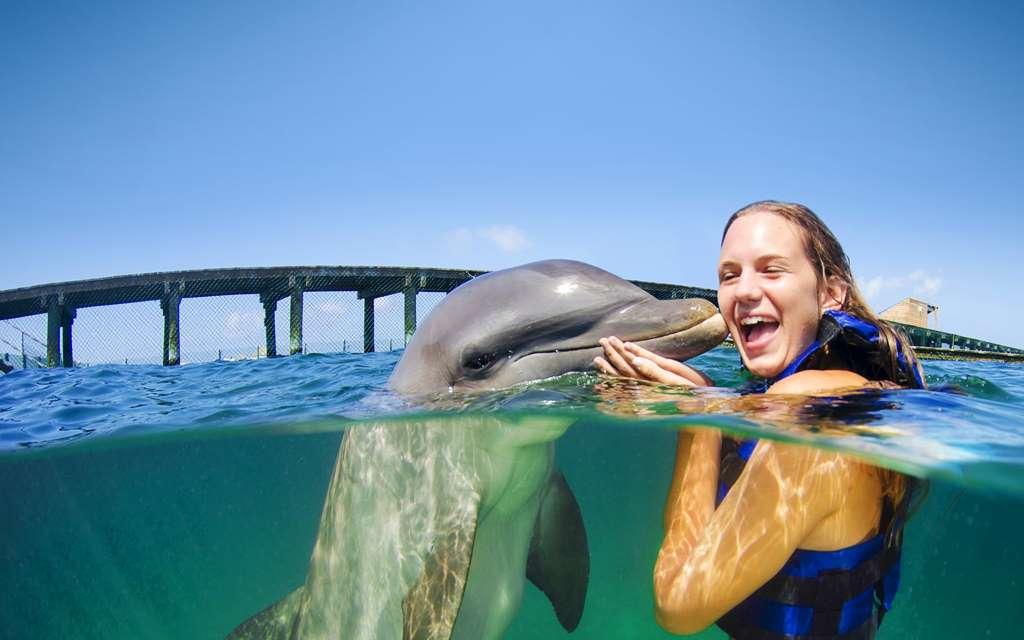înot cu delfinii la Dolphin Explorer, Punta Cana, Republica Dominicana