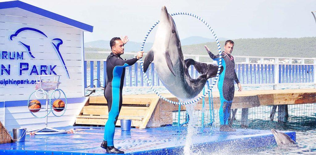 înot cu delfinii la Bodrum Dolphin Park, Bodrum, Turcia