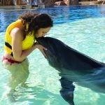 Înotul cu delfinii