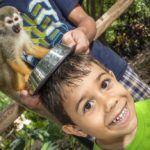 Lumea maimuţelor