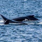 Bahia de Samana - lumea balenelor