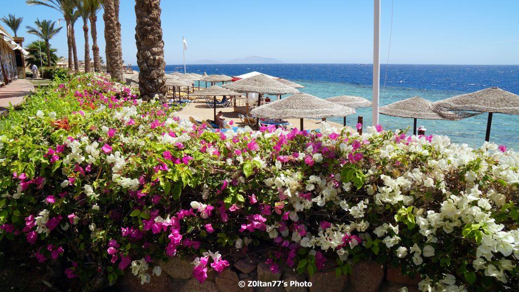 plaje din Sharm El Sheikh