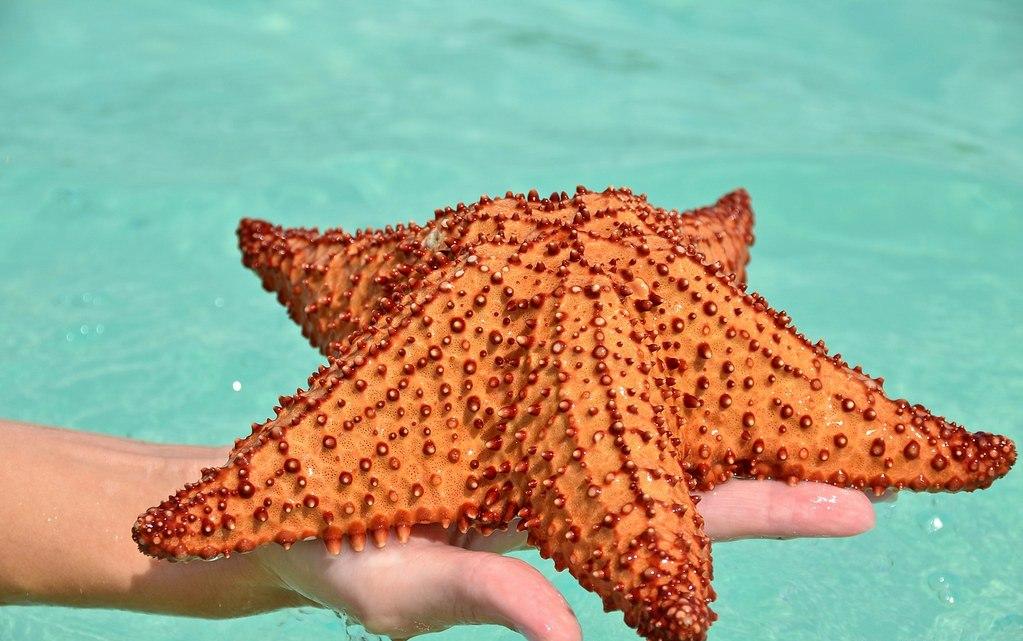 Steaua de mare, insula Saona, Republica Dominicană