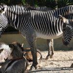 Grădina zoologică din Lisabona