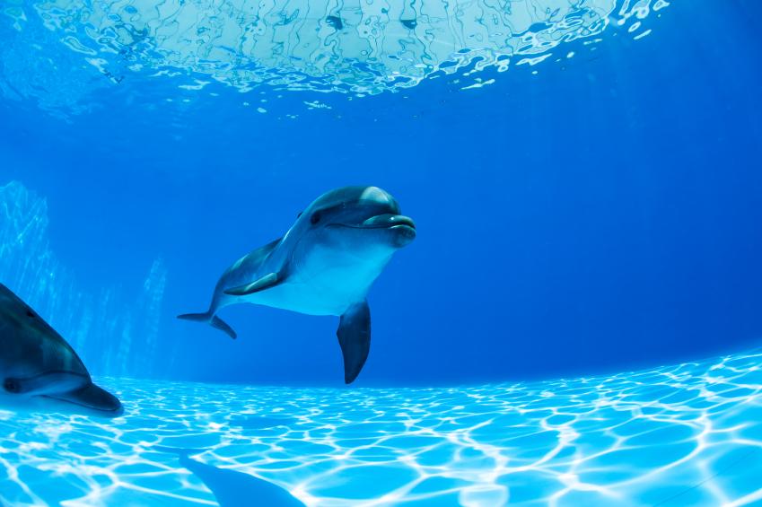 înot cu delfinii la Dolphinarium, Istanbul - Turcia