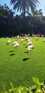 Atractii din Tenerife: Loro Parque