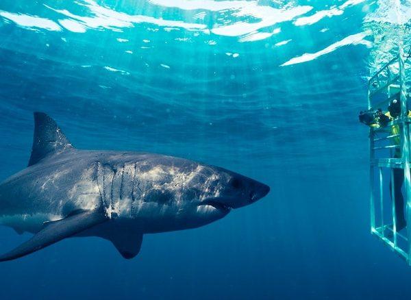 destinatii de vacanta inot alaturi de rechini