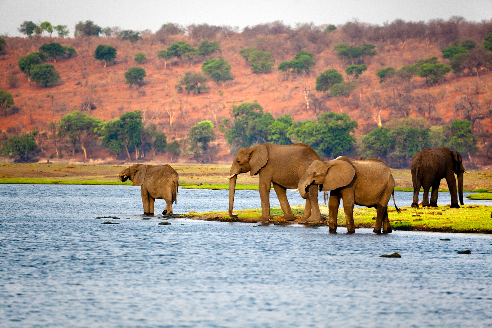 Vacanță în Botswana