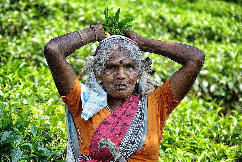Sri Lanka: Cultură şi tradiţie, foto @flickr.com