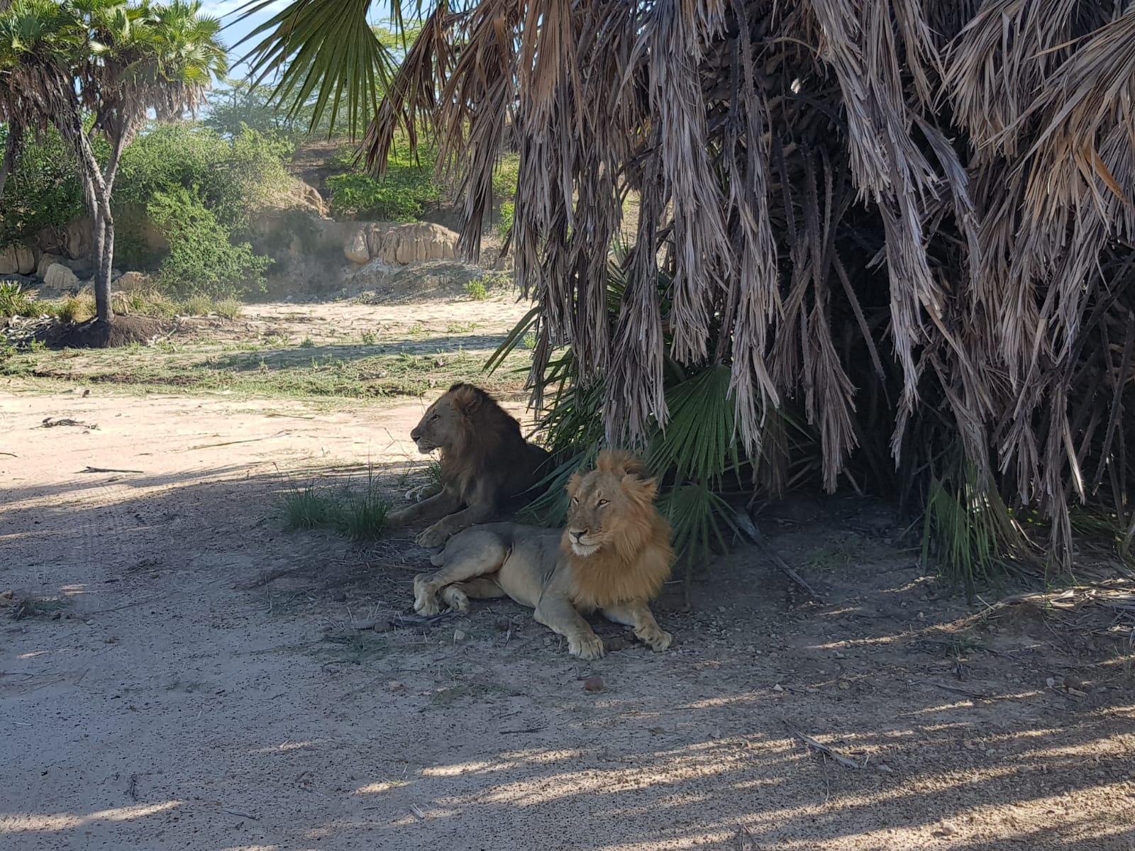 Safari în Tanzania, foto @ANCAPAVEL.RO